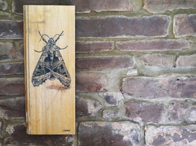 art_cabbage-moth